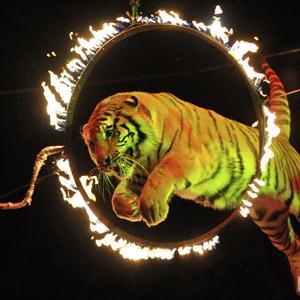 Цирки Солнечногорска