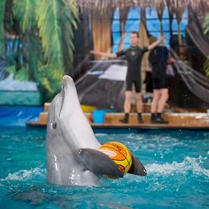 Дельфинарии, океанариумы Солнечногорска