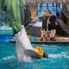 Дельфинарии, океанариумы в Солнечногорске