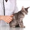 Ветеринарные клиники в Солнечногорске